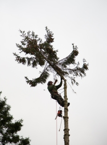 Tree Top Removal